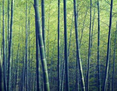 Papiers peints Bamboo Forest arbres Nature Concepts