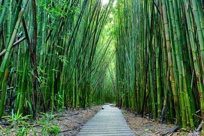 Papiers peints Bamboo forêt