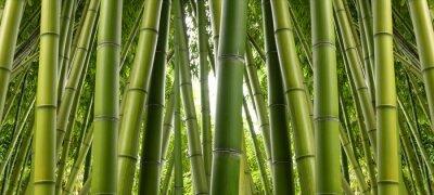 Papiers peints Bamboo Jungle
