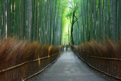 Papiers peints bambou