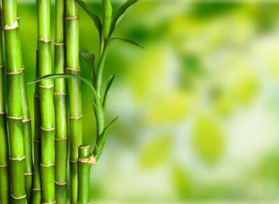 Papiers peints Bambou.