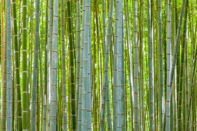 Papiers peints bambou fond dans la nature au jour