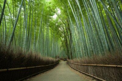 Papiers peints Bambou, forêt, sentier, Kyoto, Japon