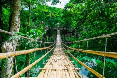 Papiers peints Bambou, piéton, suspendu, pont, rivière, forêt ...