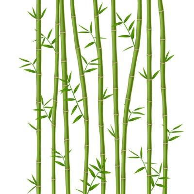 Papiers peints Bambou vert avec des feuilles isolé sur fond blanc