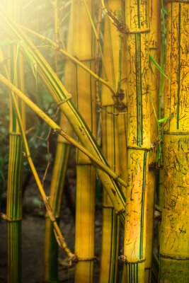 Papiers peints Bambous
