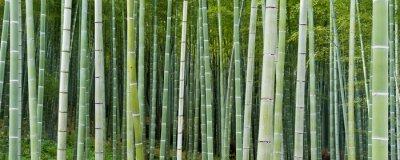 Papiers peints Bambuseae