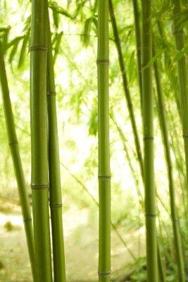 Papiers peints Bambushalme 2