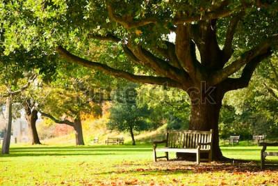 Papiers peints Banc sous l'arbre dans les jardins botaniques royaux de Londres