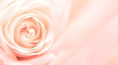 Papiers peints Bannière avec rose rose