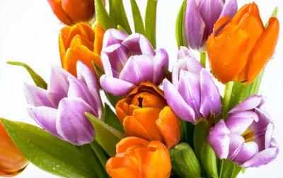 Papiers peints Beau, bouquet, pourpre, rouges, tulipes, isolé, blanc, fond