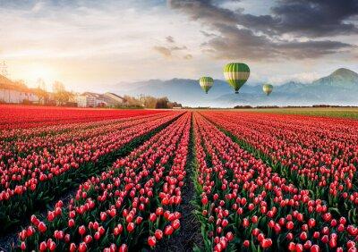 Papiers peints Beau champ de tulipes rouges en Hollande. Des ballons en arrière-plan. Fête fantastique du printemps