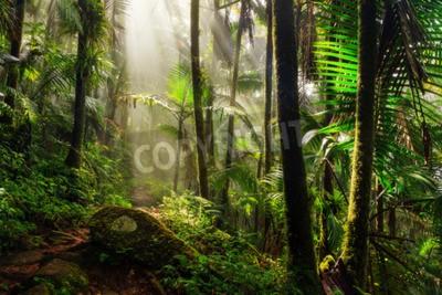 Papiers peints Beau chemin de la jungle à travers la forêt nationale El Yunque à Porto Rico
