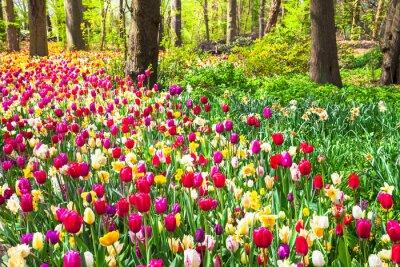 Papiers peints Beau, jardin, fleurir, vif, tulipes, Keukenhof, Parc ...