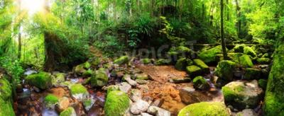 Papiers peints Beau panorama de 180 degrés d'un ruisseau dans la forêt tropicale du Parc national de Masoala à Madagascar