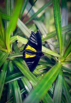 Papiers peints Beau, papillon, assied, grand, feuille