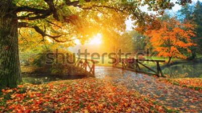 Papiers peints Beau paysage d'automne dans le parc. Photographie en extérieur à la lumière du lever du soleil