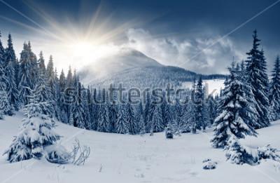 Papiers peints Beau paysage d'hiver avec des arbres couverts de neige