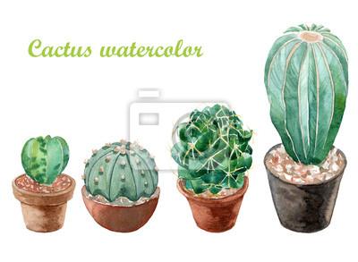 Beaucoup Peinture Cactus Aquarelle Sur Fond Blanc La Croissance