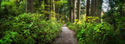 Papiers peints Beautiful forest path as panorama background