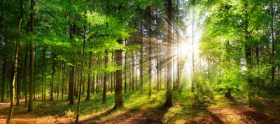 Papiers peints Beautiful rays of sunlight in a green forest