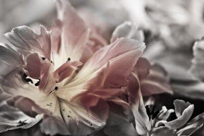 Papiers peints Beaux-arts de tulipes close-up, floue et nette