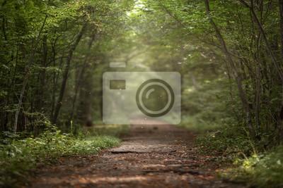 Papiers peints Belle forêt verte d'été. Fond de printemps, toile de fond