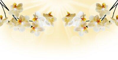 Papiers peints Belle orchidée blanche
