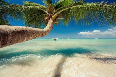Papiers peints Belle palmier sur la mer des Caraïbes