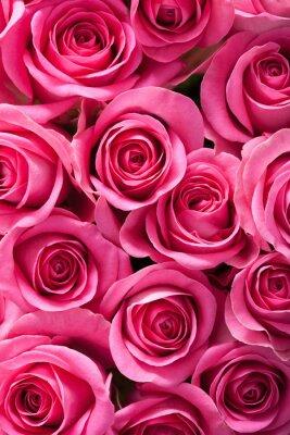 Papiers peints belle rose fleurs fond