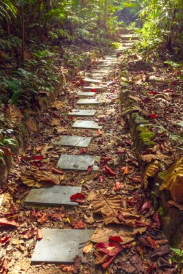 Papiers peints Belle vue sur l'escalier à la jungle, la Thaïlande