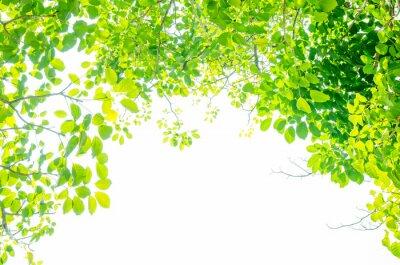 Papiers peints Belles feuilles vertes sur fond blanc