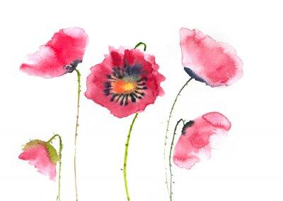 Papiers peints Belles fleurs de pavot rouge, aquarelle