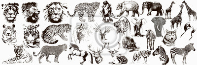 Papiers peints Big collection of wild animals. Exotic danger African. Tropical. Vector illustration on white background.