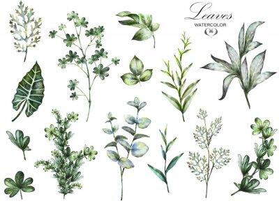 Papiers peints Big Set éléments aquarelle - herbes, feuilles. Collection jardin et herbe sauvage, feuilles, branches, illustration isolé sur fond blanc, eucalyptus, exotiques, feuilles tropicales. vert