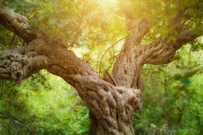 Papiers peints Big Tree à Forest