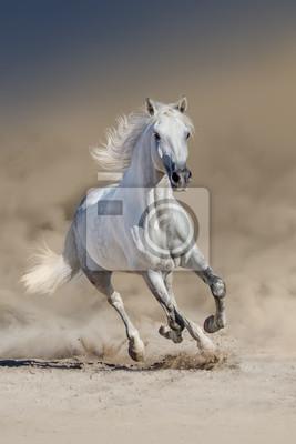Blanc, cheval, long, crinière, course, désert, poussière papier ...