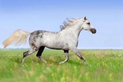 Papiers peints Blanc, cheval, trotting, Été, pré