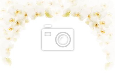 Blanc, orchidée, fleurs, cadre, salle, texte
