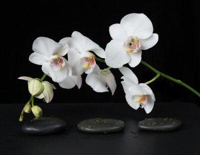 Papiers peints Blanc, orchidée, noir, fond