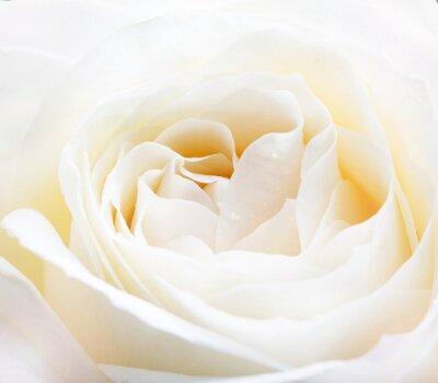 Papiers peints blanc rose délicate fermer l'image