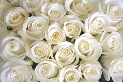 Papiers peints Blanc, roses, fond