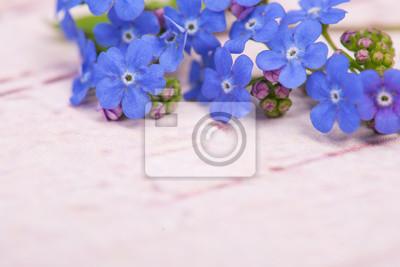 Bleu, oublier, moi, pas, fleurs, sur, haut, droit, coin, image, pastel, rose, bois, fond, espace, texte