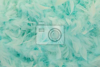 Bleu, turquoise, plumes, boa, plein, cadre, image