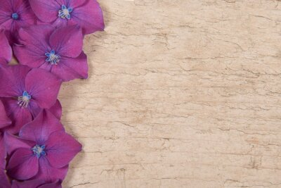 Blooming hortensia flowers on wooden background with copy space