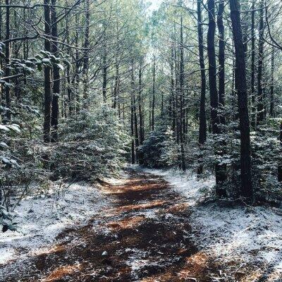 Papiers peints Bois d'hiver