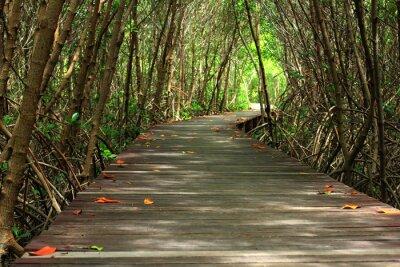 Papiers peints Bois, pont, forêt