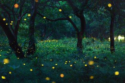 Papiers peints Bokeh lumière de luciole en forêt
