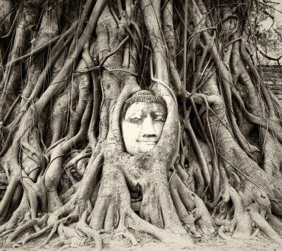 Papiers peints Bouddha, tête, arbre, racines, wat, Mahathat, Ayutthaya, Thaïlande