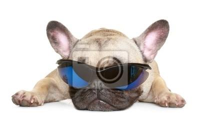 07c6aa215d3d8 Bouledogue français de lunettes de soleil papier peint • papiers ...
